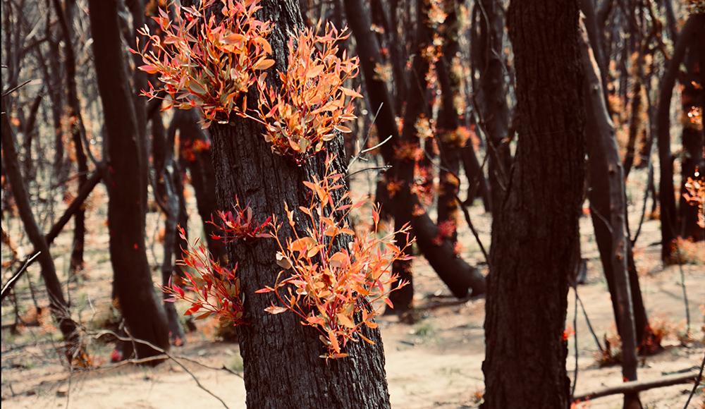 bushfire season in australia